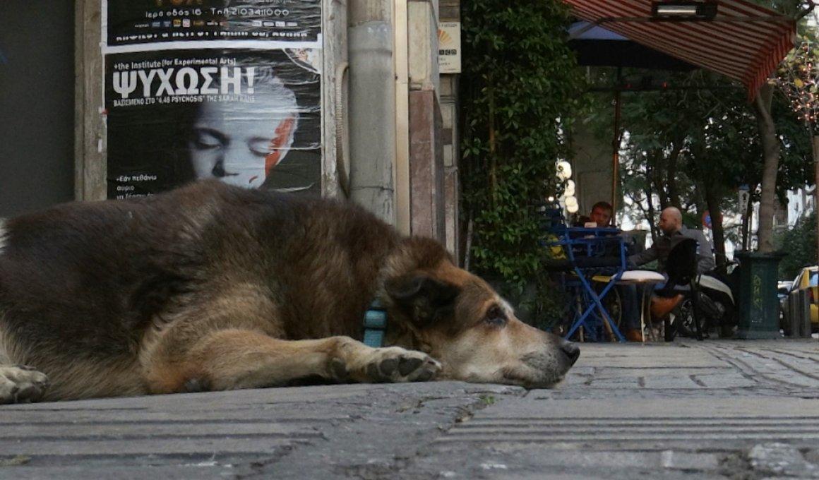 φεστιβαλ ντοκιμαντερ θεσσαλονικης 2020