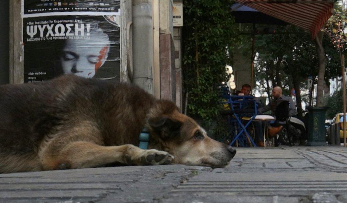 Τα ελληνικά ντοκιμαντέρ που θα δείτε στο online 22ο ΦΝΘ
