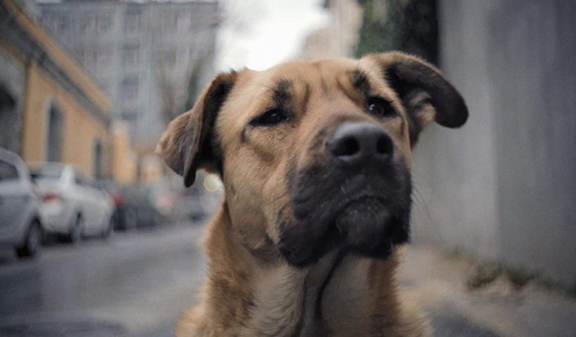 """""""Stray"""": Οι αδέσποτοι σκύλοι της Κωνσταντινούπολης"""