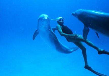 """Δωρεάν προβολή για το """"Dolphin Man"""" του Λευτέρη Χαρίτου για τη Παγκόσμια Ημέρα Γης"""