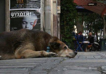 22ο Φεστιβάλ Ντοκιμαντέρ Θεσσαλονίκης: Τα ελληνικά φιλμ