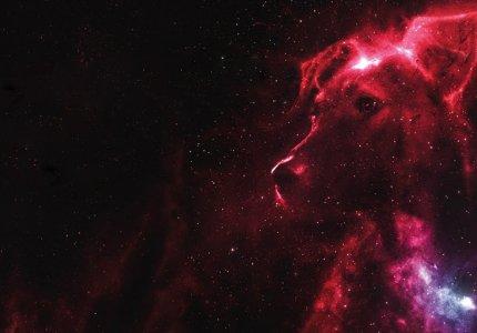 """Νύχτες Πρεμιέρας 2020: """"Space dogs"""" - Κριτική"""