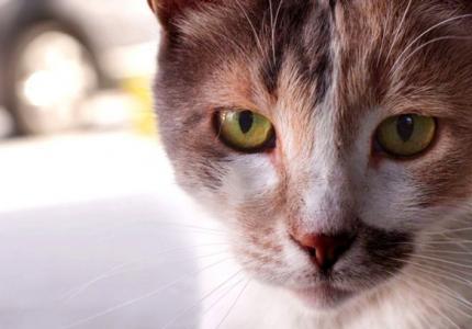 Οι γάτες της Κωσταντινούπολης