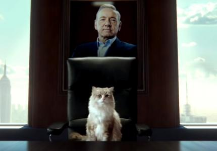 O Kέβιν Σπέισι γίνεται γάτα! Σοβαρά;